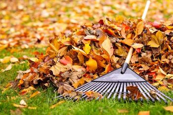 Fall Clean Up services in Ruskin Florida