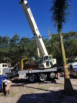 Tree services in Spring Hill by Sunshine Sod and Landscaping LLC
