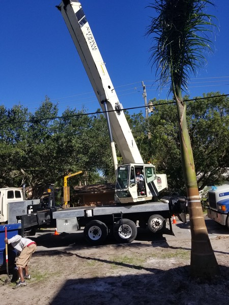 Tree Removal in Tampa, FL (1)